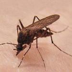 denk-rolladentechnik-insektenschutz